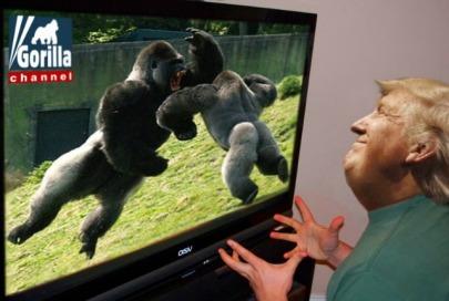 gorillachannel2